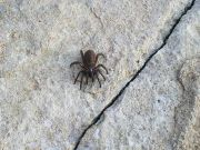 Ikaria - Ecological - Insects 1