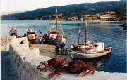 Ikaria - Sea 29