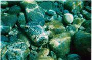 Ikaria - Undersea 2