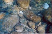 Ikaria - Undersea 4